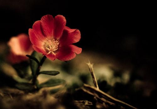 Flower_bed1